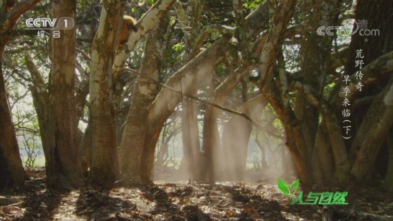 《人与自然》 20201008 荒野传奇——旱季来临(下)