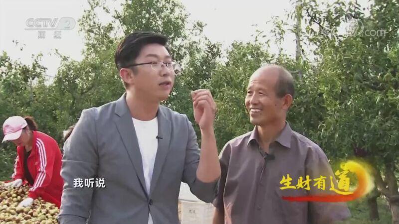 《生财有道》 20201014 咱们家乡有特产——山东沾化:欢乐的枣园庆丰收