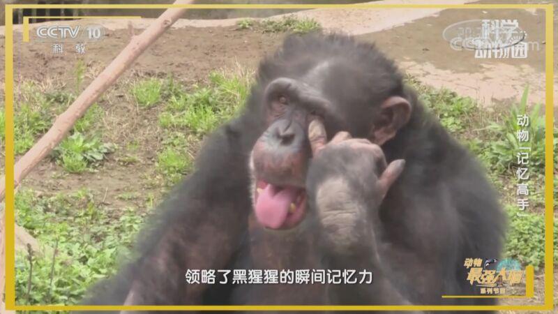 """《科学动物园》 20201017 动物""""记忆高手"""""""