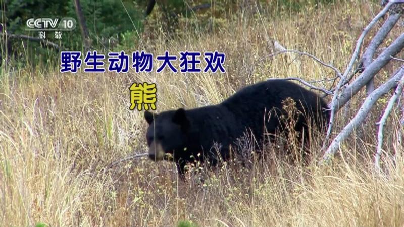 《自然传奇》 20210102 野生动物大狂欢·熊