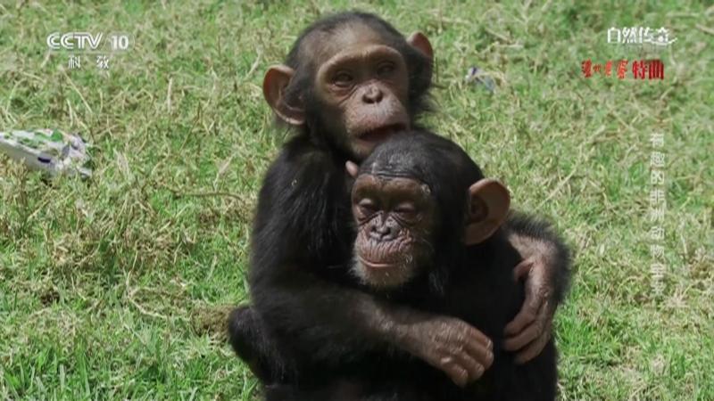 《自然传奇》 20210116 有趣的非洲动物宝宝