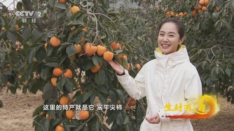 《生财有道》 20210125 陕西富平:红红的柿子味道好 小康路上少不了