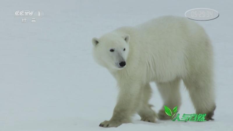 《人与自然》 20210224 冰海雪原之旅——夏季(上)