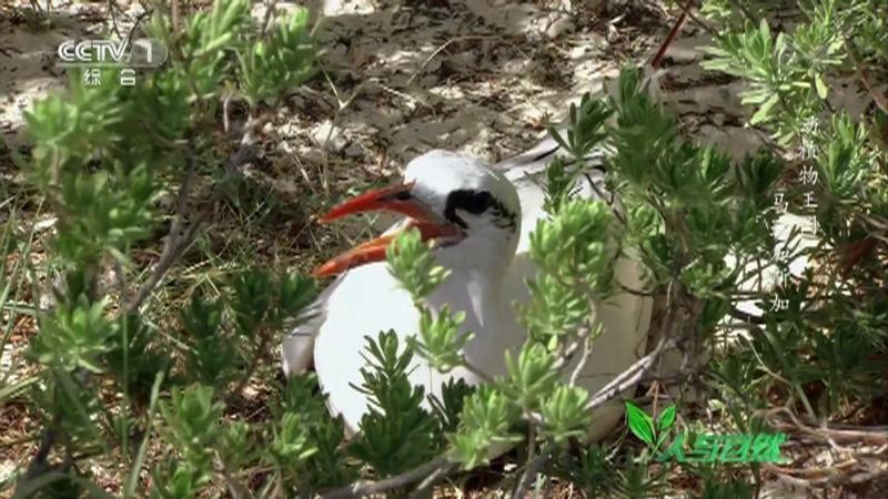 《人与自然》 20210307 动植物王国——马达加斯加