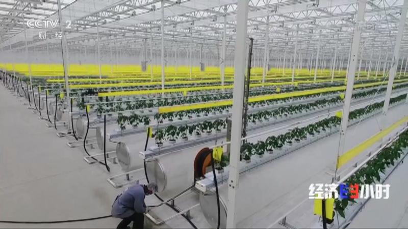 """《经济半小时》 20210308 上海农民""""慧""""种田"""