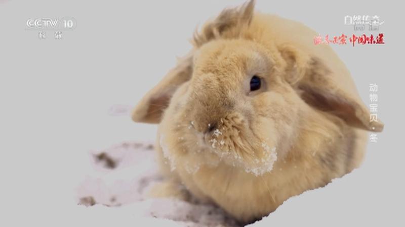 《自然传奇》 20210312 动物宝贝·冬