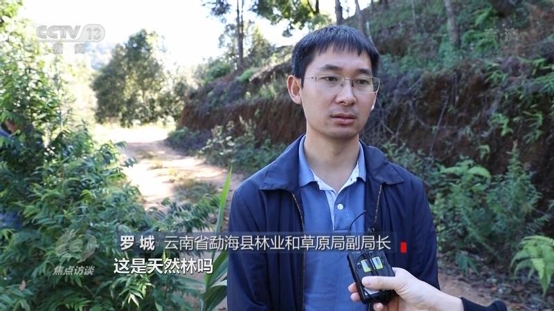 《焦点访谈》 20210407 整治毁林种茶 守住绿水青山