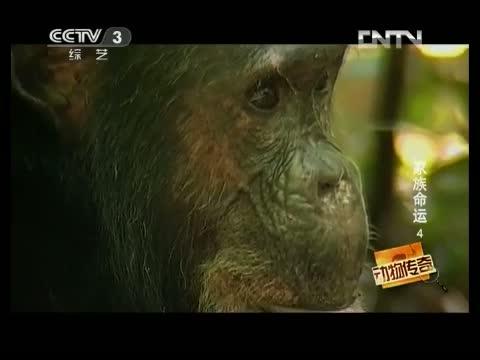 动物传奇(娱乐)_中国网络电视台