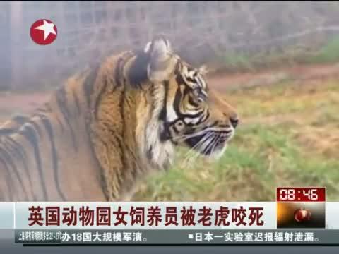 英国动物园女饲养员被老虎咬死