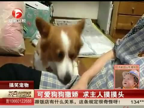 [每日新闻报]可爱狗狗撒娇 求主人摸摸头 20130809