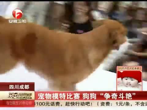 宠物也时尚!柴犬模特走红网络