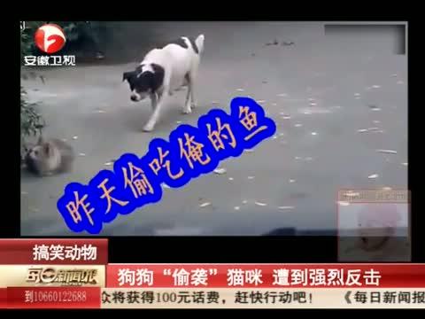 XM专题策划_猫狗大战,你猜谁赢了? 00:00:33