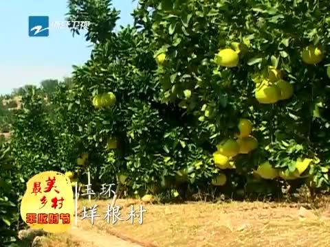 [浙江新闻联播]特别策划:到最美乡村 享受丰收时节 20131120