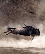 大迁徙——角马群里的间谍.Trek – Spy on the Wildebeest.2007