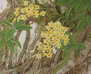 丛林珍卉--1992年--53x64
