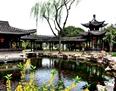 يانغتشو: التمتع بزهور البرقوق بجانب بركة اللوتس