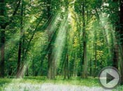 《森林之歌》<img src=http://img.tv.cctv.com/image/20090520/IMAG1242786892144279.gif>