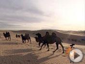 《大漠长河》