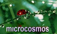 <font color=0629fd>《微观世界》(2003年) 展现虫子们的幸福生活</font>