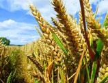 Mozambique : renouveau dans l'agriculture