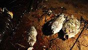 紫金矿业之殇:豪取国资<br>直接损失可能达8亿