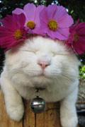 卷心菜大红花我都很百搭 日本明星猫猫叔震后报平安