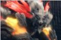 《噬神者2》游戏截图