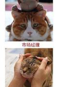 化身萌猫 游戏从业人员搞笑表情图(猫版)