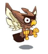 呆目齿轮鹰