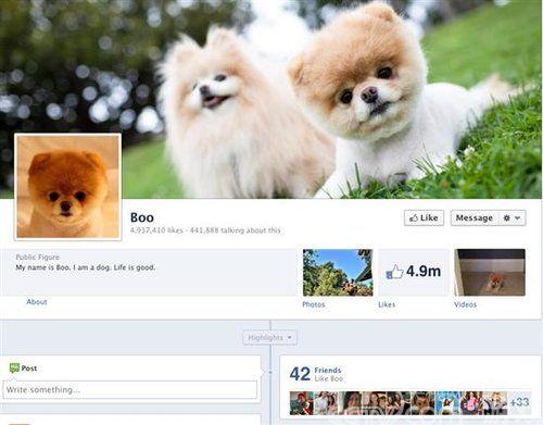 史上最萌宠物boo facebook员工萌宠图赏