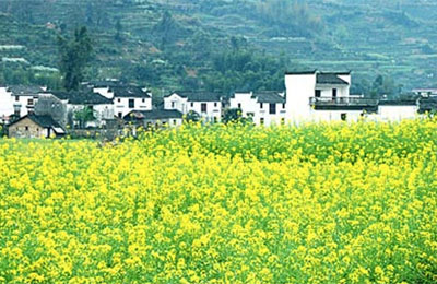 建设美丽乡村 扮靓美丽中国_新闻频道_央视网(cctv.