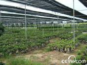 漳浦台湾农民创业园