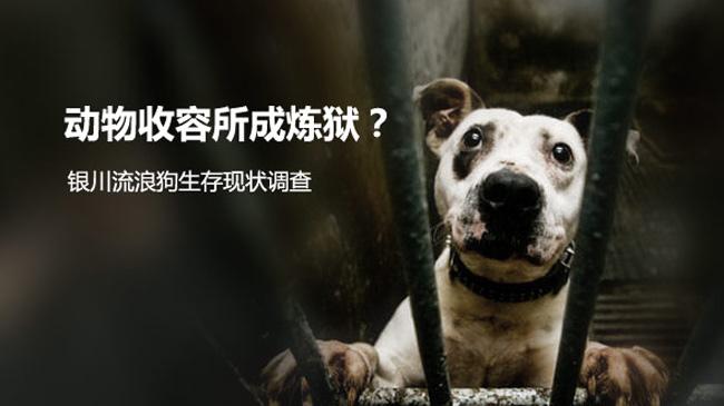 救助流浪动物的封面