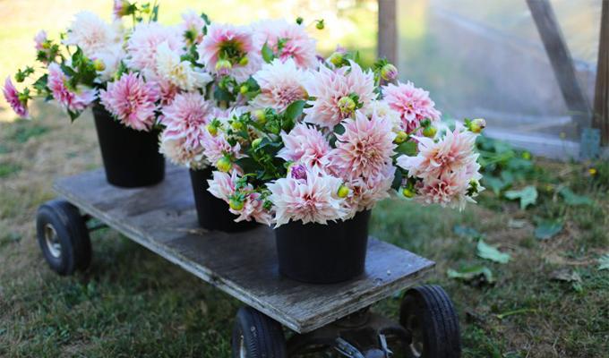 白露时节花卉如何养护?