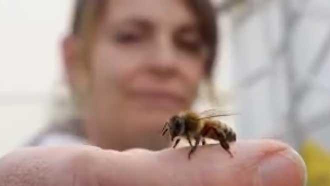 [每日农经]养蜂不卖王浆卖蜂王 20190611
