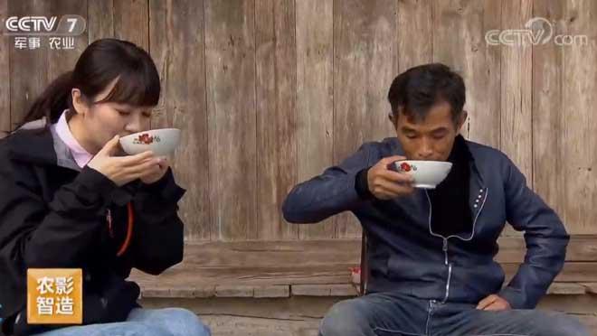 [每日农经]越种越有滋味的藤茶 20190614