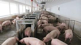 韩媒称韩国5天未现非洲猪瘟新疫情 正进行二次防疫