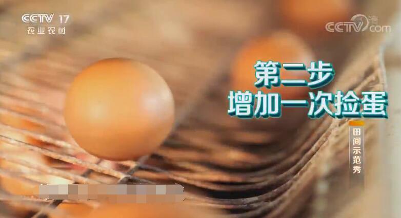 《田间示范秀》 20191021 精养蛋鸡巧卖蛋