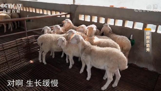 《田间示范秀》 20200327 拯救亏本的羊场