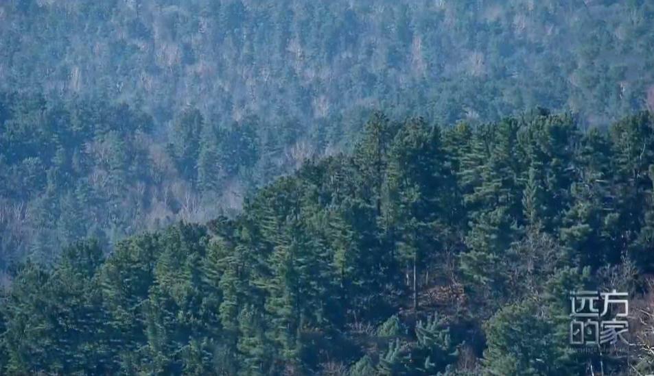 《远方的家》 20200429 大好河山 小兴安岭——森林中的故事