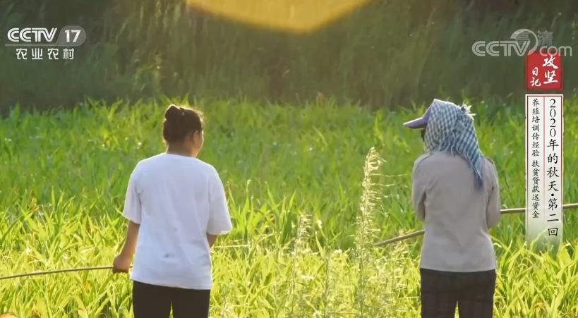 《攻坚日记》 20200924 2020年的秋天·第二回 养殖培训传经验 扶贫贷款送资金
