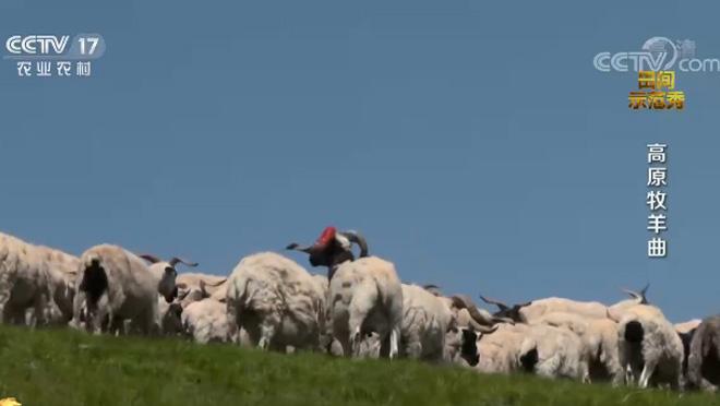 《田间示范秀》 20201014 高原牧羊曲