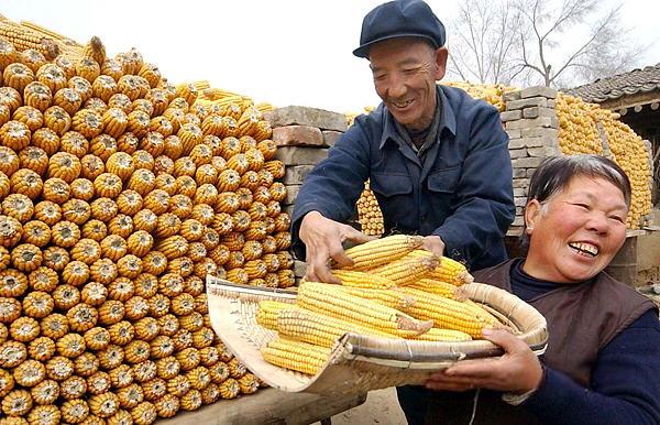 2004年年末,因为粮食丰收和各种惠农政策开始实施,新华社记者来到山西灵丘,来到刘银帮这个种粮大户家里,在院子里拍下了刘银帮夫妇兴高采烈码放玉米的照片。