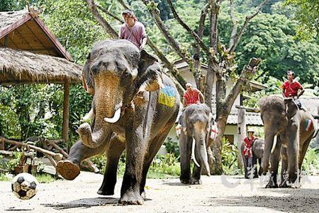 泰国清迈的大象营地新华社/EPA欧新