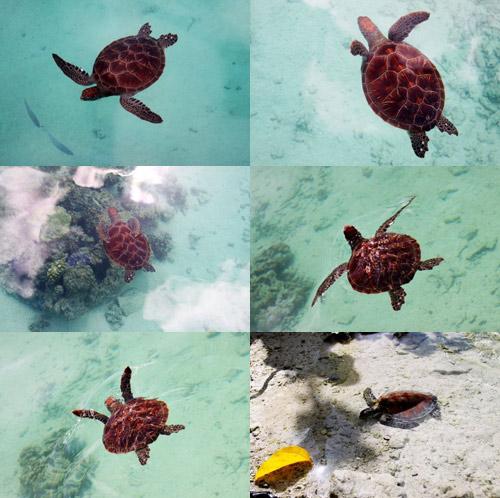 海龟的伊甸园