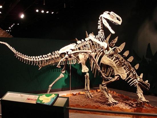 """中国古动物馆里寻找记忆中的""""黄河象"""""""