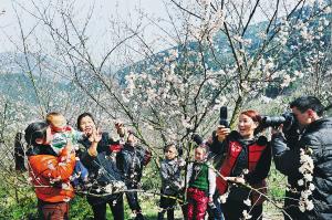 绍兴诸暨首届樱花节人气旺盛 节会助推生态旅游