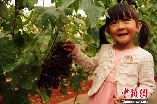孩子在爱博欣葡萄庄园