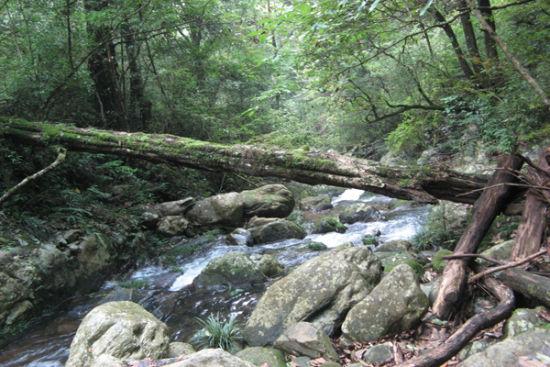 导语:一提到原始森林,大家可能首先想到的是亚马逊
