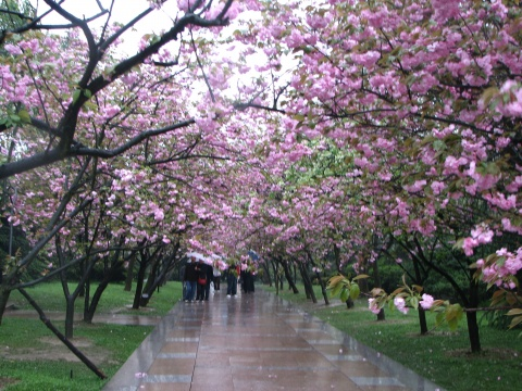 南山植物园 重庆赏花